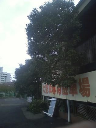 20101005_0000.JPG